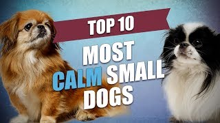 Top 10 Mild Tempered and Calm Small Dogs