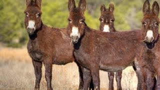 Donkey Cheese: The Most Expensive Cheese in the World!