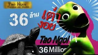 เต่างอย เอเลี่ยน ( TOP) - จินตหรา พูนลาภ Jintara Poonlarp Tao Ngoi