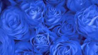 Ya Taiba without instrumental Music- My favorite Islamic Nausheed (Song)