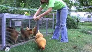 Raising Hens in Columbia, Missouri - Containment