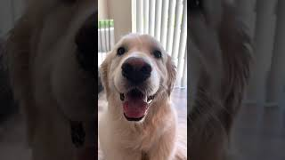 Owner Asks Dog Questions About Who Is a Good Boy And Whom Will They Cuddle - 1174073