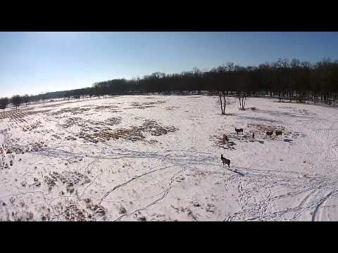 Elks at Elk Grove Village