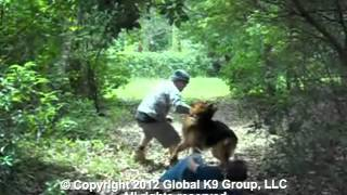 Global K9 Group Protection Dogs