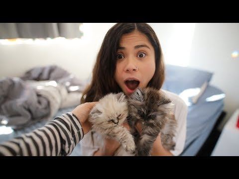 Download Youtube: Surprising Girlfriend With Baby Kittens!!!