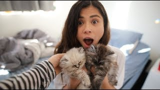 Surprising Girlfriend With Baby Kittens!!!