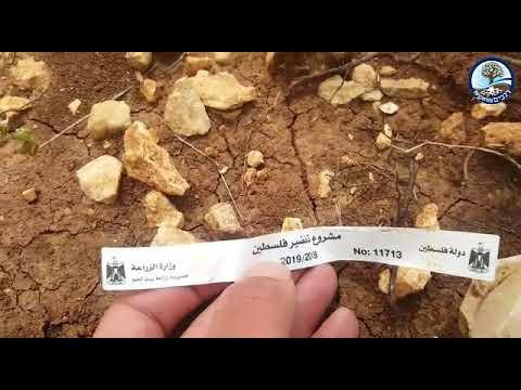 פרוייקט פלסטין הירוקה