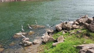Fishing ban on China's Chishui River helps defend biodiversity