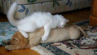 Дикие и смешные домашние животные (Wild and funny pets)