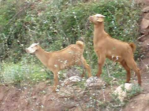 Wild life in North of Africa - Morocco - Taza