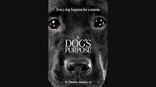 """ПОСТЕРЫ ФИЛЬМА """"A DOG'S PURPOSE"""""""