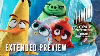 The Angry Birds Movie 2 Extended Preview