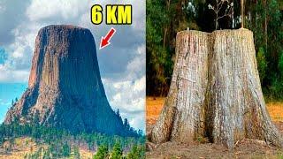 ¿existieron árboles gigantes en el pasado?