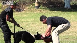 Perros de Protección y Seguridad