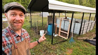 my-240-square-foot-pig-farm