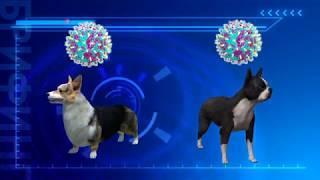 В США распространяется собачий грипп