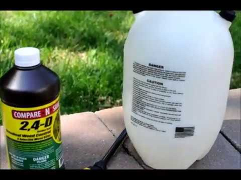 Lawn Weed Control Using 2, 4-D