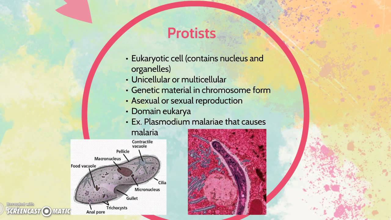 Differences Between Bacteria And Protists Youtube