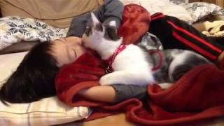 オス猫のモモちゃんは五歳の息子が大好きです。 thumbnail