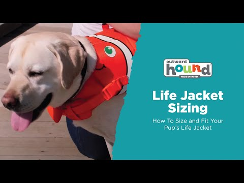 How To Size And Fit Your Outward Hound Dog Life Jacket