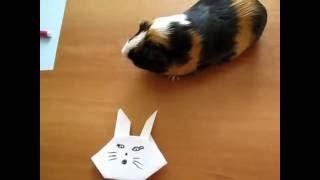 Простое оригами для детей. Как сделать мордочку зайчика.