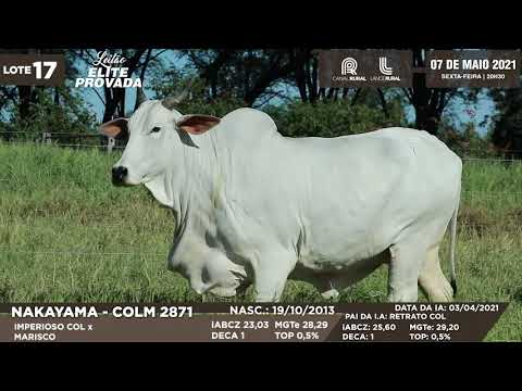LOTE 17   COLM 2871