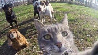 Приколы кошки делающей селфи невероятны