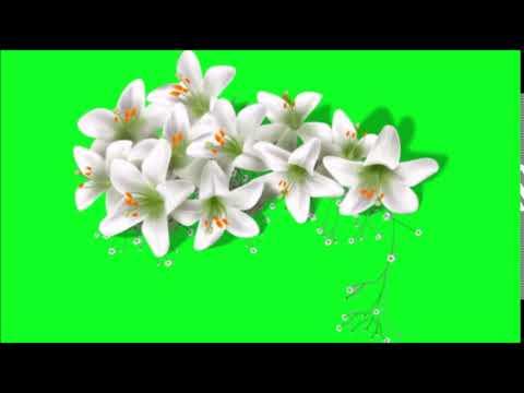 white flowers green screen effect thumbnail