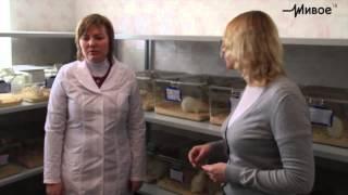 Кошкин дом: Жизнь лабораторной крысы