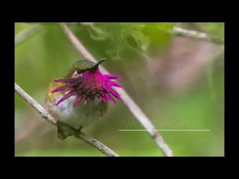 LOS TARRALES, GUATEMALA birding reserve