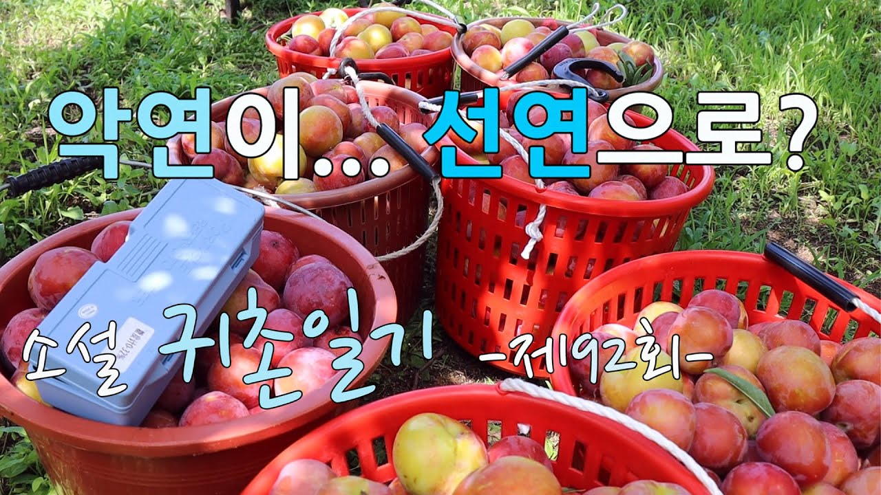 시골소설 귀촌일기 -92회- 악연이 선연으로?