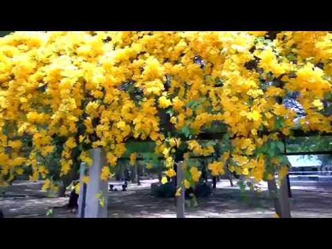 Yellow Flowers. Natural Videos. Amazing Videos | Flowers | Flowers Garden