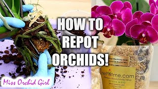 Orchid Care for beginners - How to repot Phalaenopsis Orchids