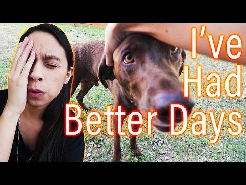 Day 8: Foster Dog Struggles     Bummer Adoption Update