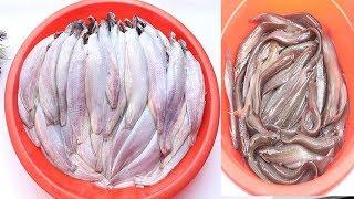 মিনিটে শিং মাছ কাটা ও পরিস্কারের যাদুকরী পদ্ধতি    How to clean shing mach    Cat Fish