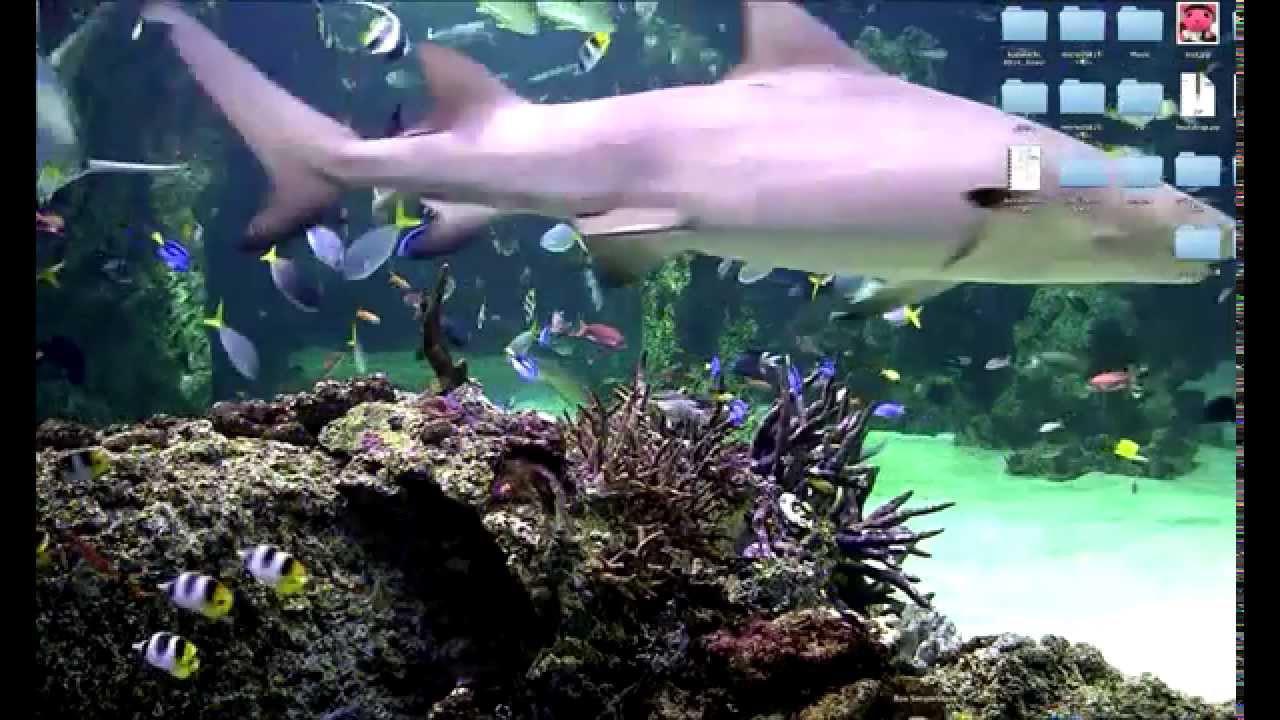 デスクトップを水族館にしてみた Youtube