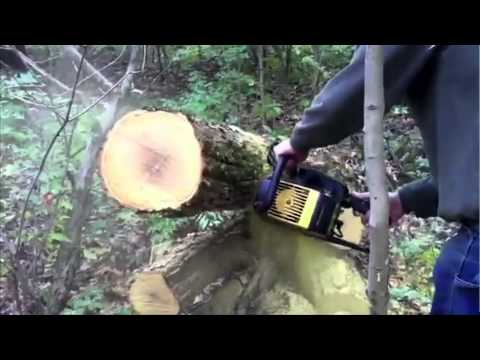 Chainsaw Buyers Guide- Which One is Best for you? (Power Equipment Plus) from YouTube · Duration:  3 minutes 28 seconds