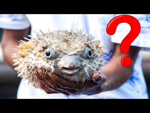 İnsan Öldüren 10 Zehirli Deniz Canlısı