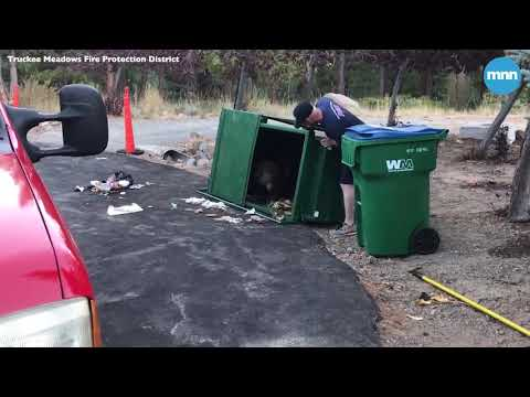 Bear cubs helped from trash can by Nevada firefighters