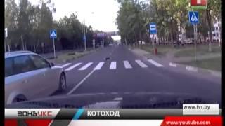 Кот-пешеход!