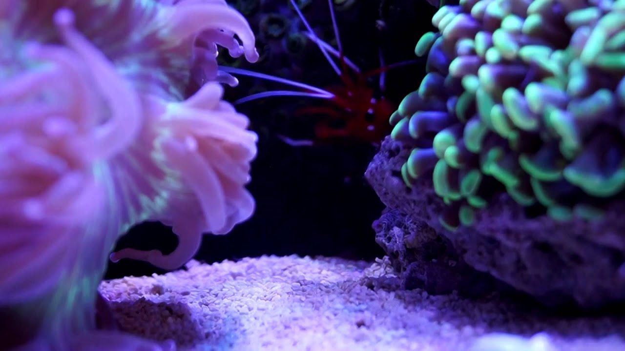 Nanoreef hd lps sps coral tank youtube