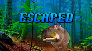 Escape Game Save The Hippo   Video Walkthrough   WowEscape