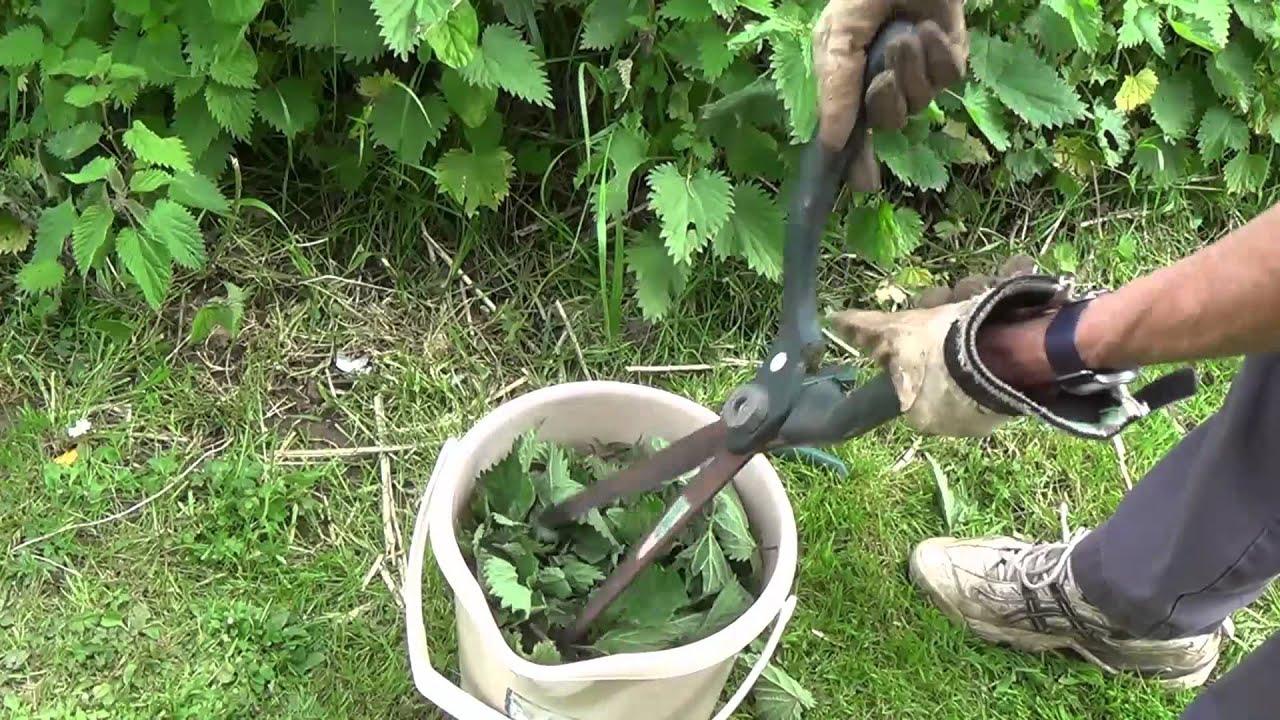 Stinging nettle as a fertilizer