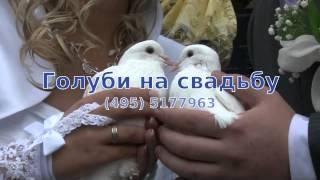 Голуби на свадьбу москва