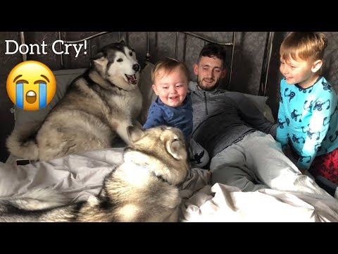 Baby Refuses To Go Sleep And Stop Crying Until He Has His Huskies!!