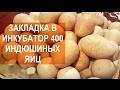 Птицевод Валентин Сохорев.  Закладка в инкубатор MultiLife 400 индюшиных яиц.