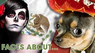 In MEXIKO werden kleine Hunde geopfert?! | 10 Facts about..(mit Taddl)