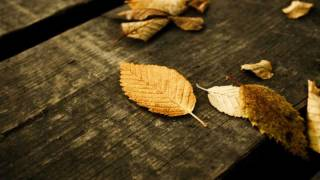 """Dance of Leaves"" by Fariborz Lachini - رقص برگها -  ساخته فریبرز لاچینی"