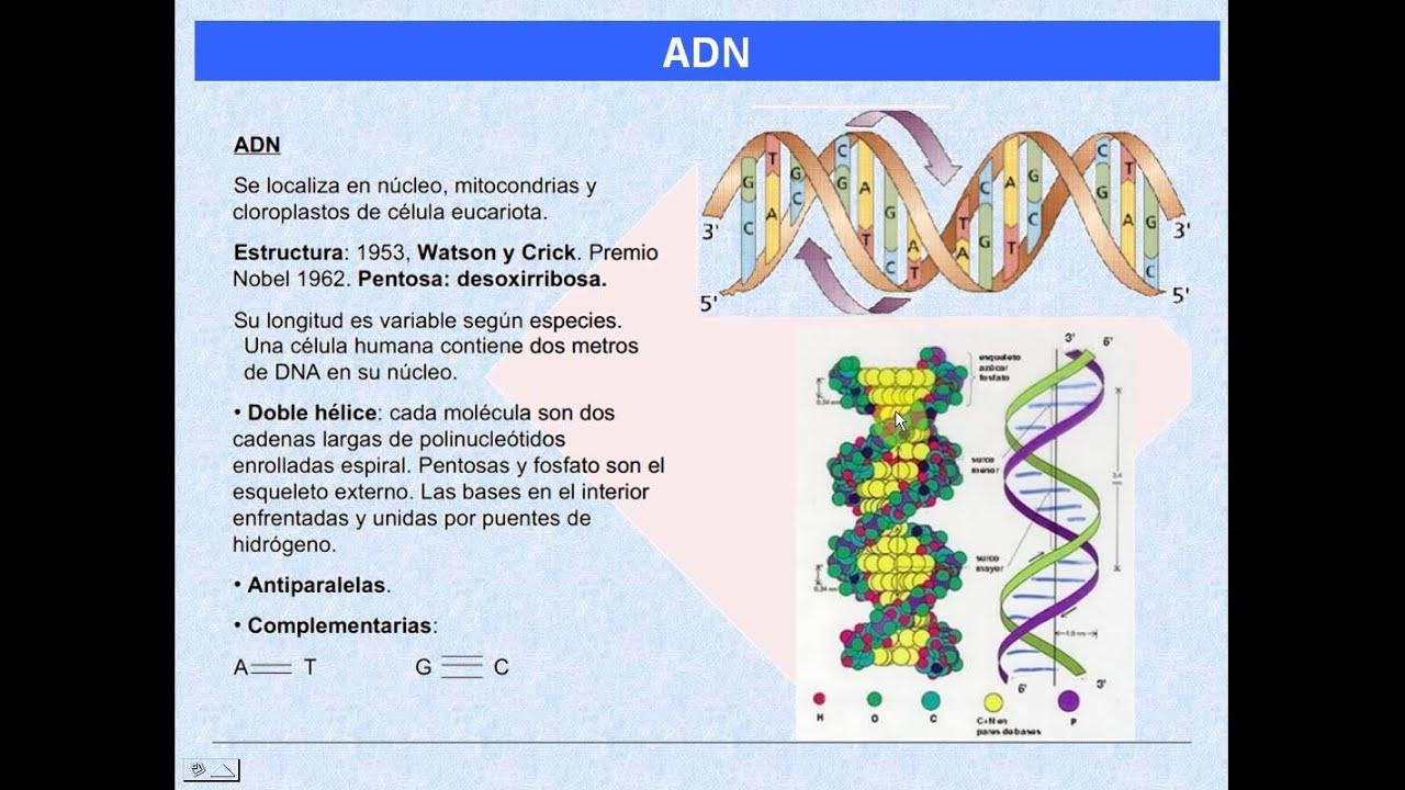 La Información Genética Episodio I