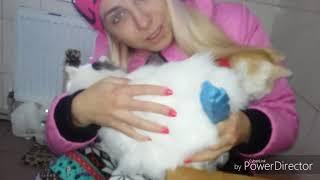 Приют животных! г.Харьков! Они нуждаются в нашей помощи, любви и поддержке!